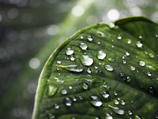 drops - nature wallpaper - 320x240